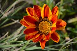 Flower1 ~ West Coast, South Africa
