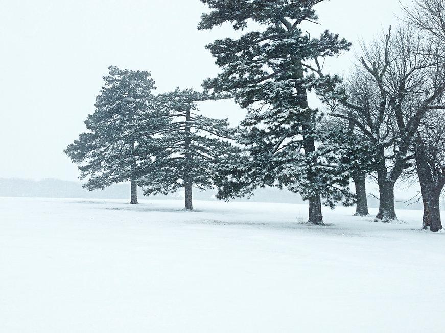 Snow Trees Illionois.jpg