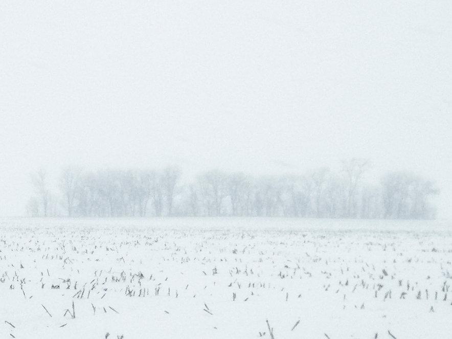 Snow Storm Trees .jpg