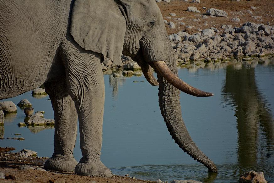 Elephant Drking, Etosha Nat'l Park Namib