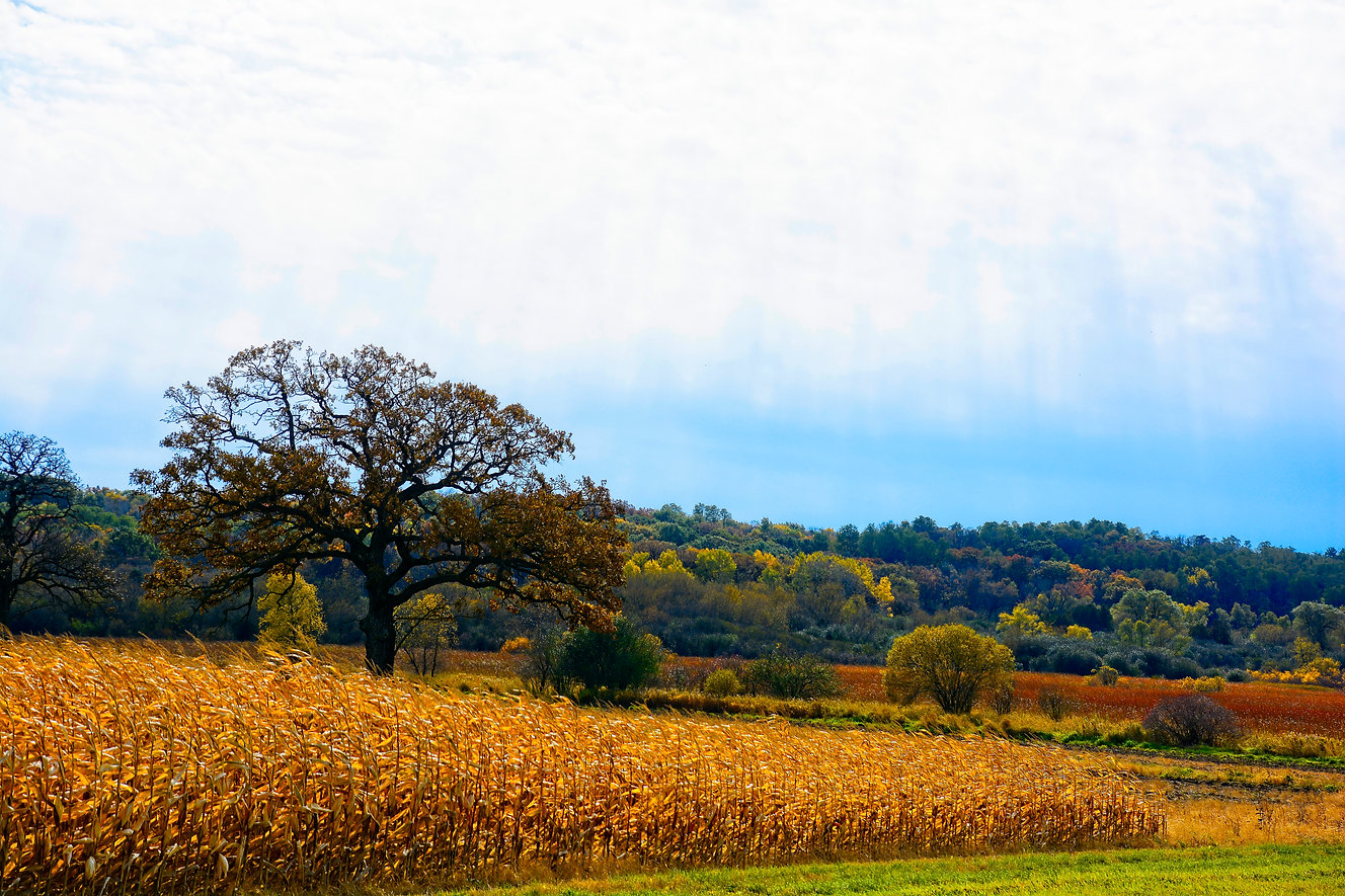 Wisconsin Fall9.jpg