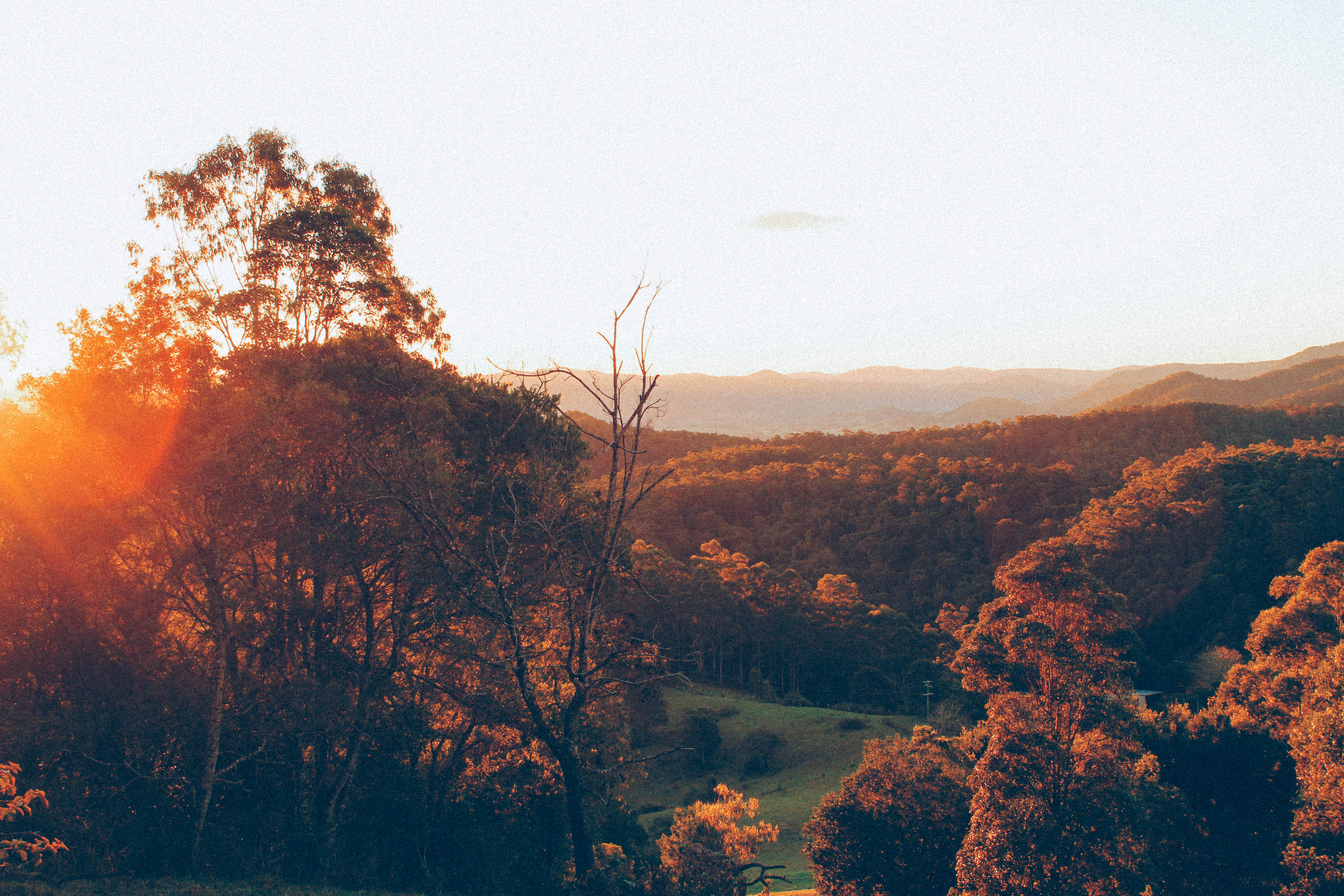 Morning Sunrise - Maleny 2012.jpg