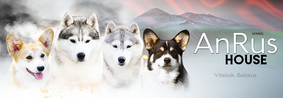 Питомник Анрус Хаус Беларусь Витебск , Kennel siberian husky and welsh corgi Belarus , Vitebsk