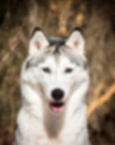 Kennel Innisfree , Puppies for sale , kennel Anrus House Belarus , Vitebsk