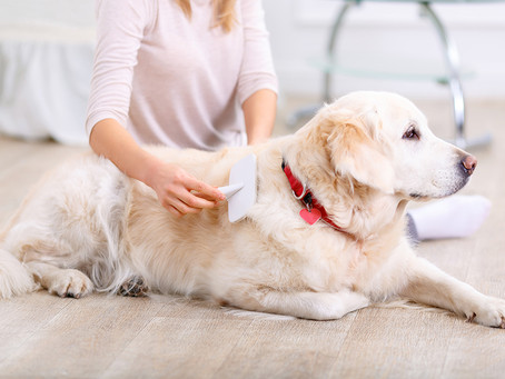How To Avoid Water Line Repair Plumbing Problems When Washing Your Dog | Midlothian, TX