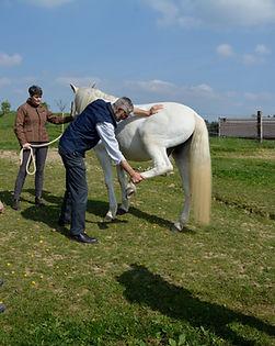 Sdg 1 02 PferdeOsteopath.JPG