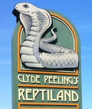 clyde peelings reptile land_edited.jpg
