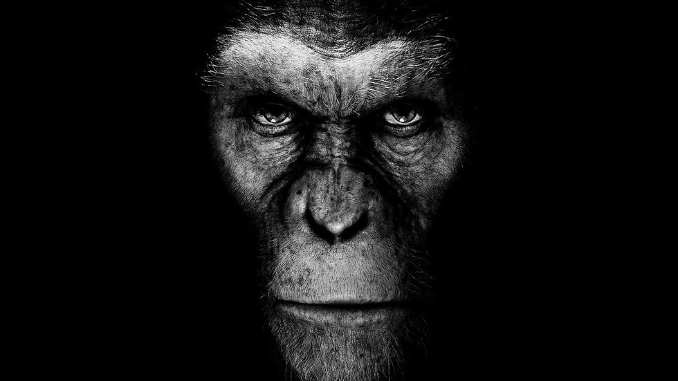 monkeys-planet_00393576.jpg