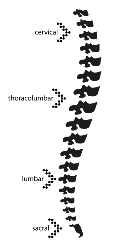 spine-fixation-systems.png