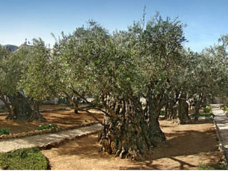 ARCHEOLOGICAL FIRST: REMAINS OF SECOND TEMPLE RITUAL BATH FOUND AT GETHSEMANE IN JERUSALEM