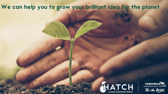 HATCH: Taronga Accelerator Program 2020