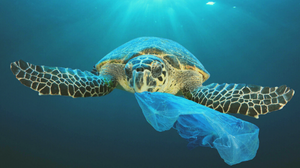 How Plastic Contributes to Climate Change?