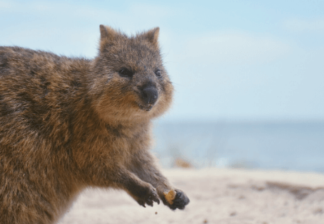 Endangered Australian Animals