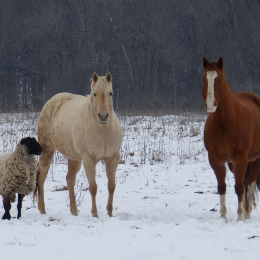 Shadrach, Bailey & Dewey