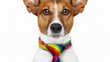 LGBTQ Ellesmere Port Pride Fun Day (1)