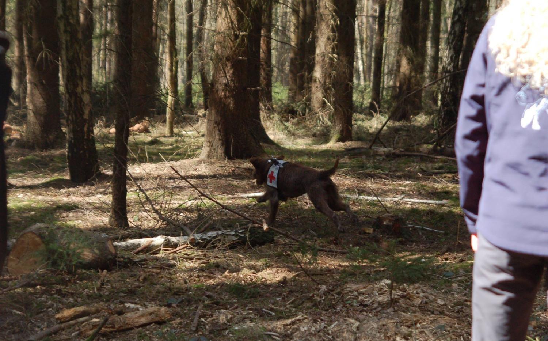 Hund nach dem Ansatz