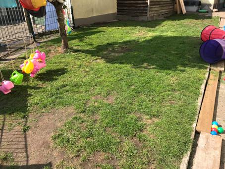 Der Welpenspielgarten wird neu gestaltet