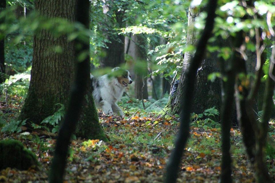 Hund in der Suche