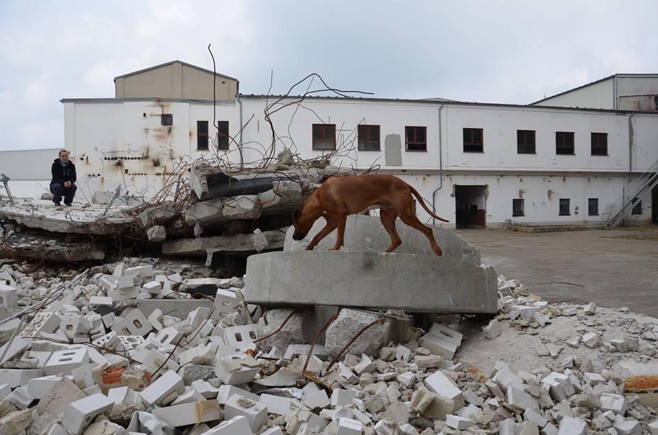 Gewöhnung an Trümmer