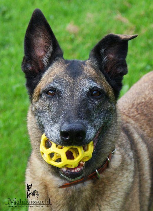 Frisbee 10,5 Jahre