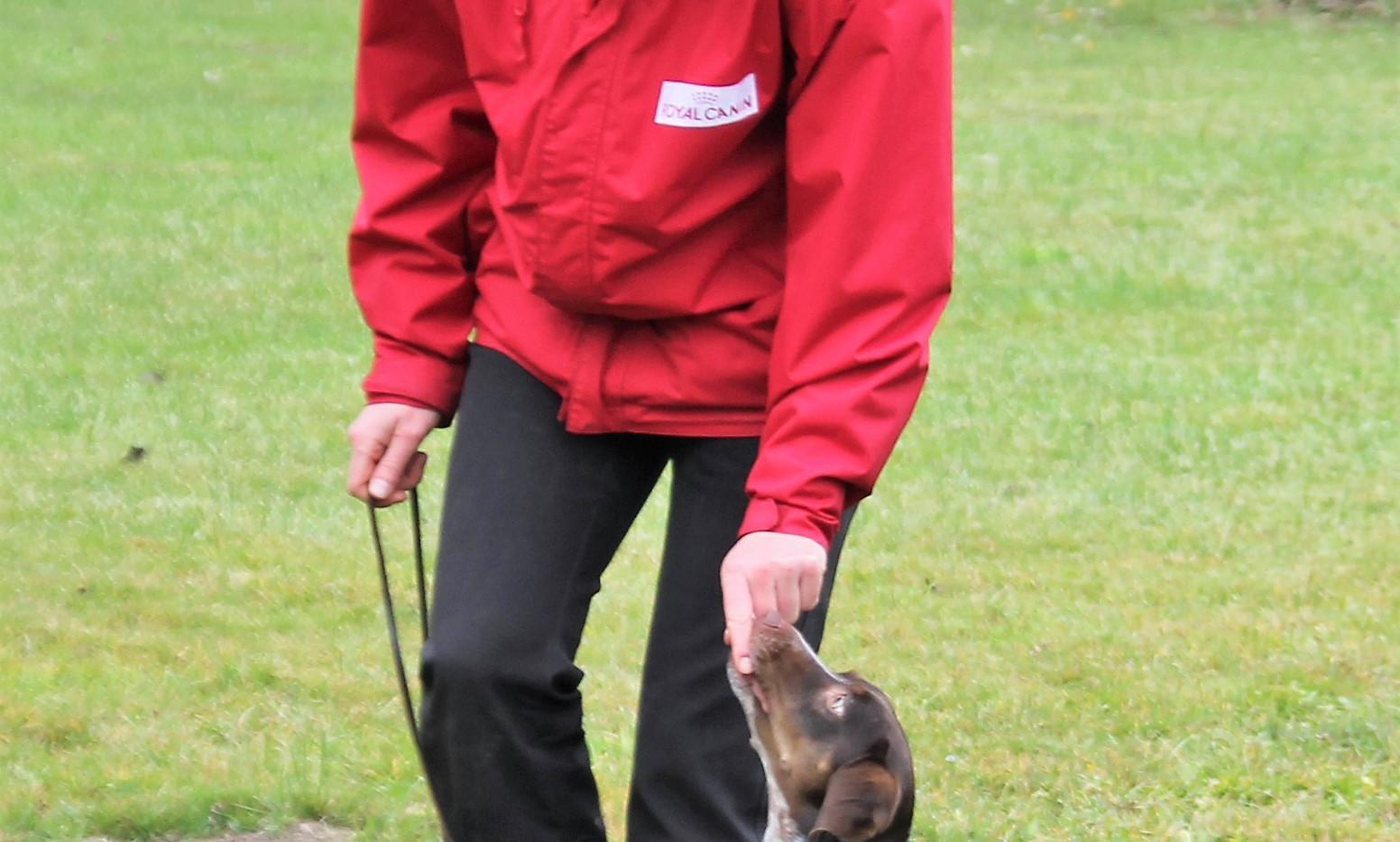 Aufbau Fußlaufen kleiner Hund