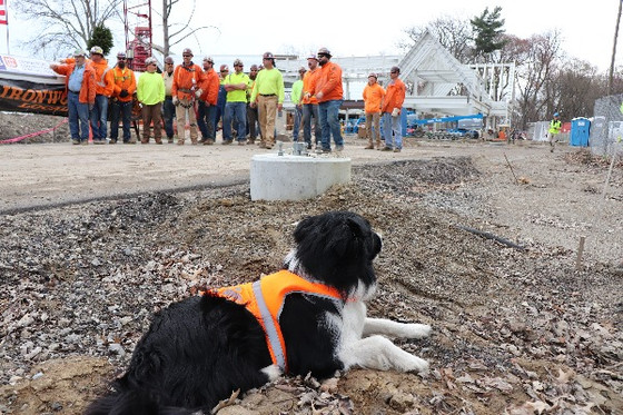 Moss the Dog Checks in on Construction