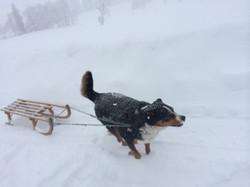 Vollgas in den Winter