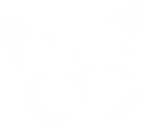 Butterfly Facelift