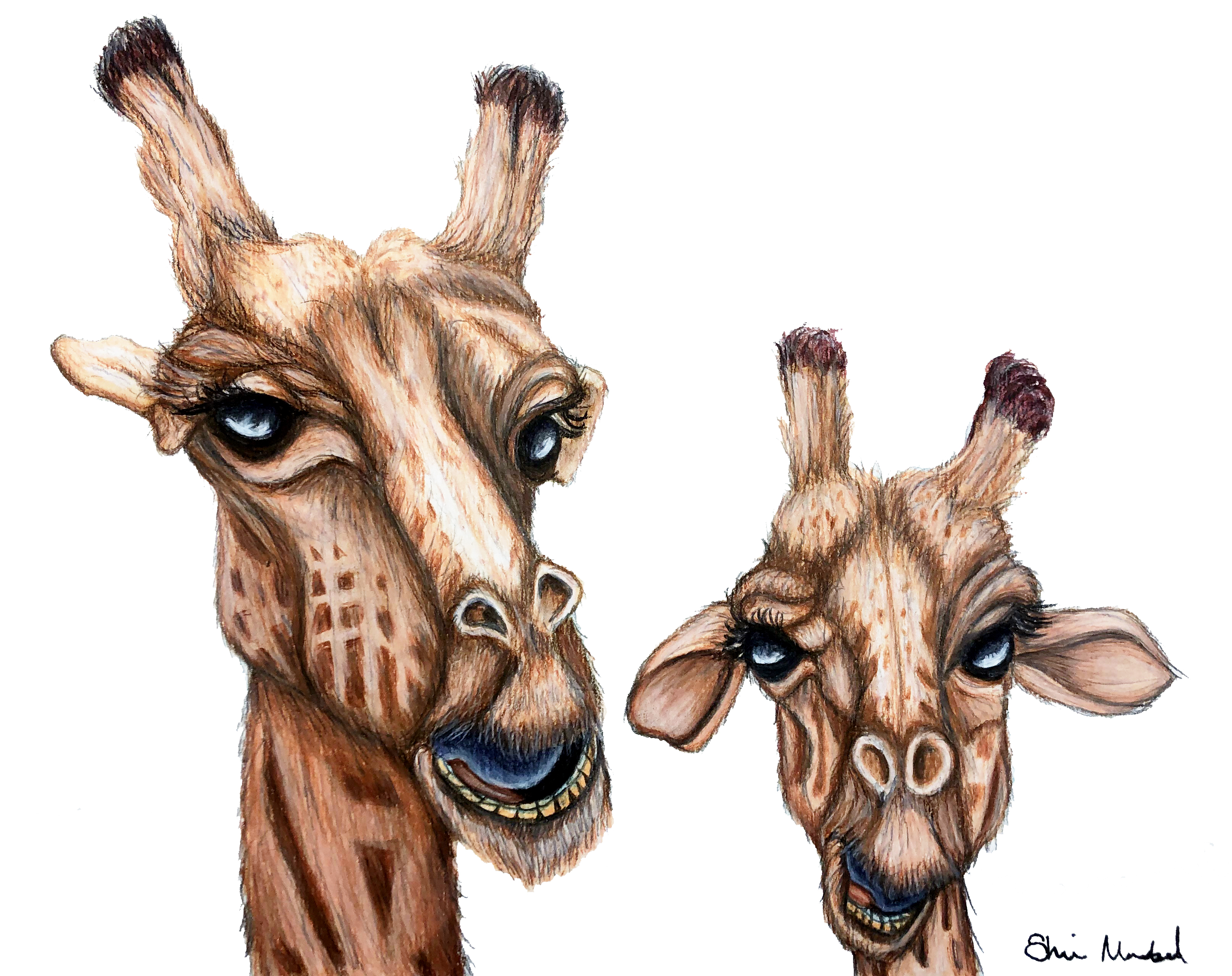 Laughing Giraffes