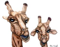 Laughing Giraffes