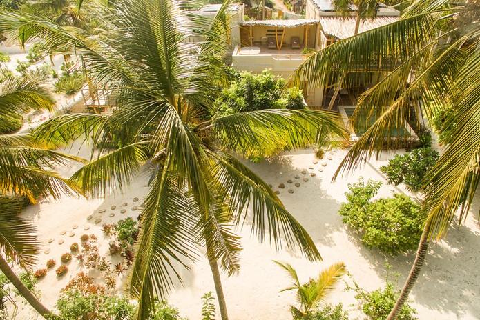 palm-tree-with-villajpg