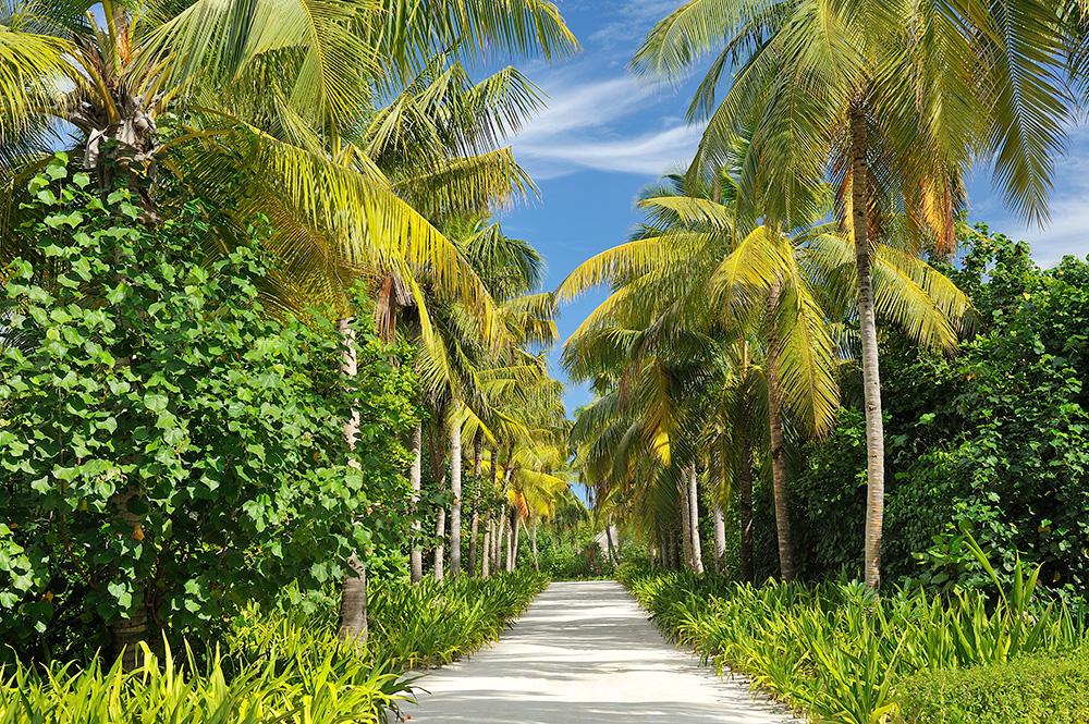 Ayada_Maldives240