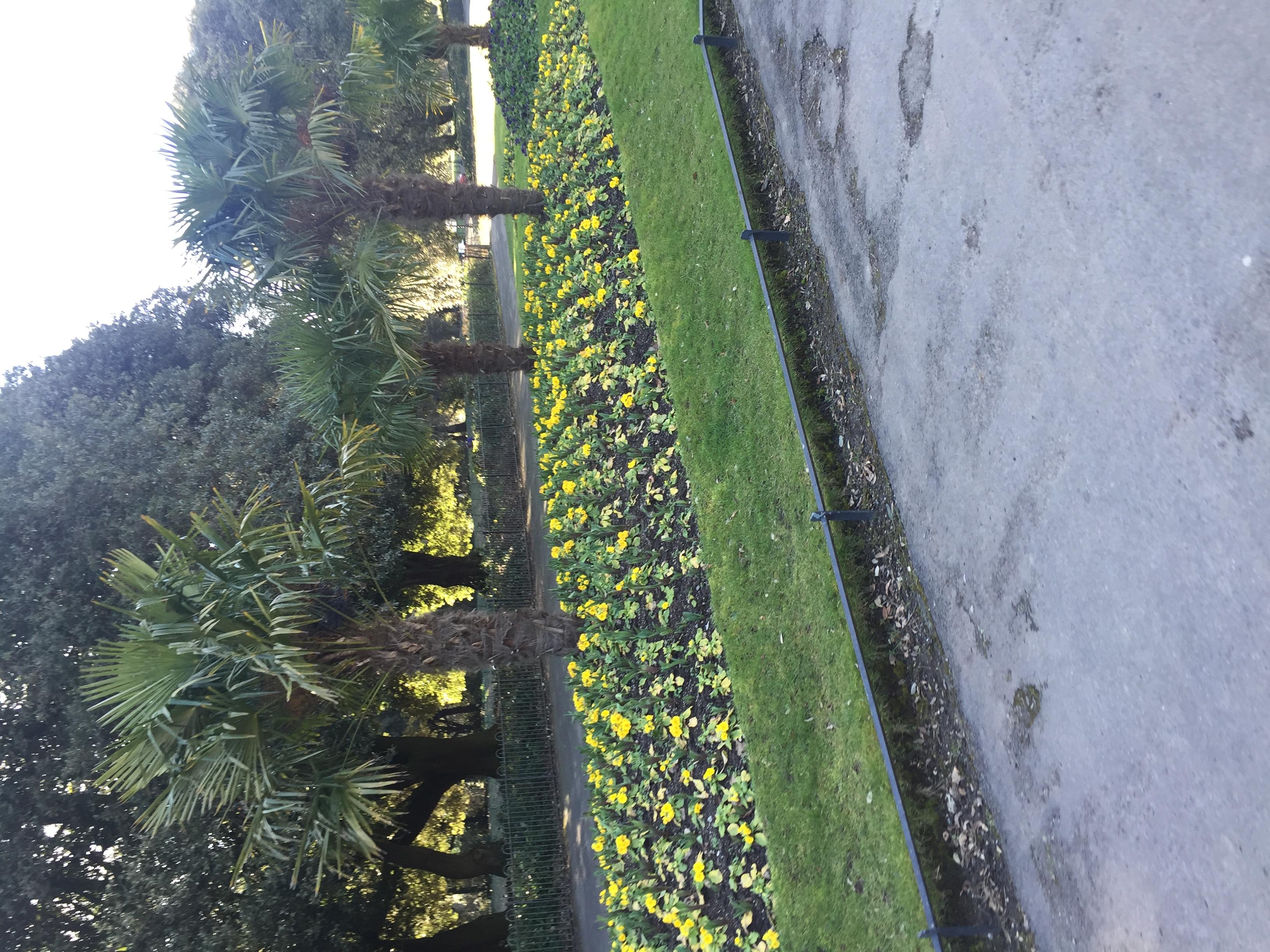 Phoenix Park Flower Field