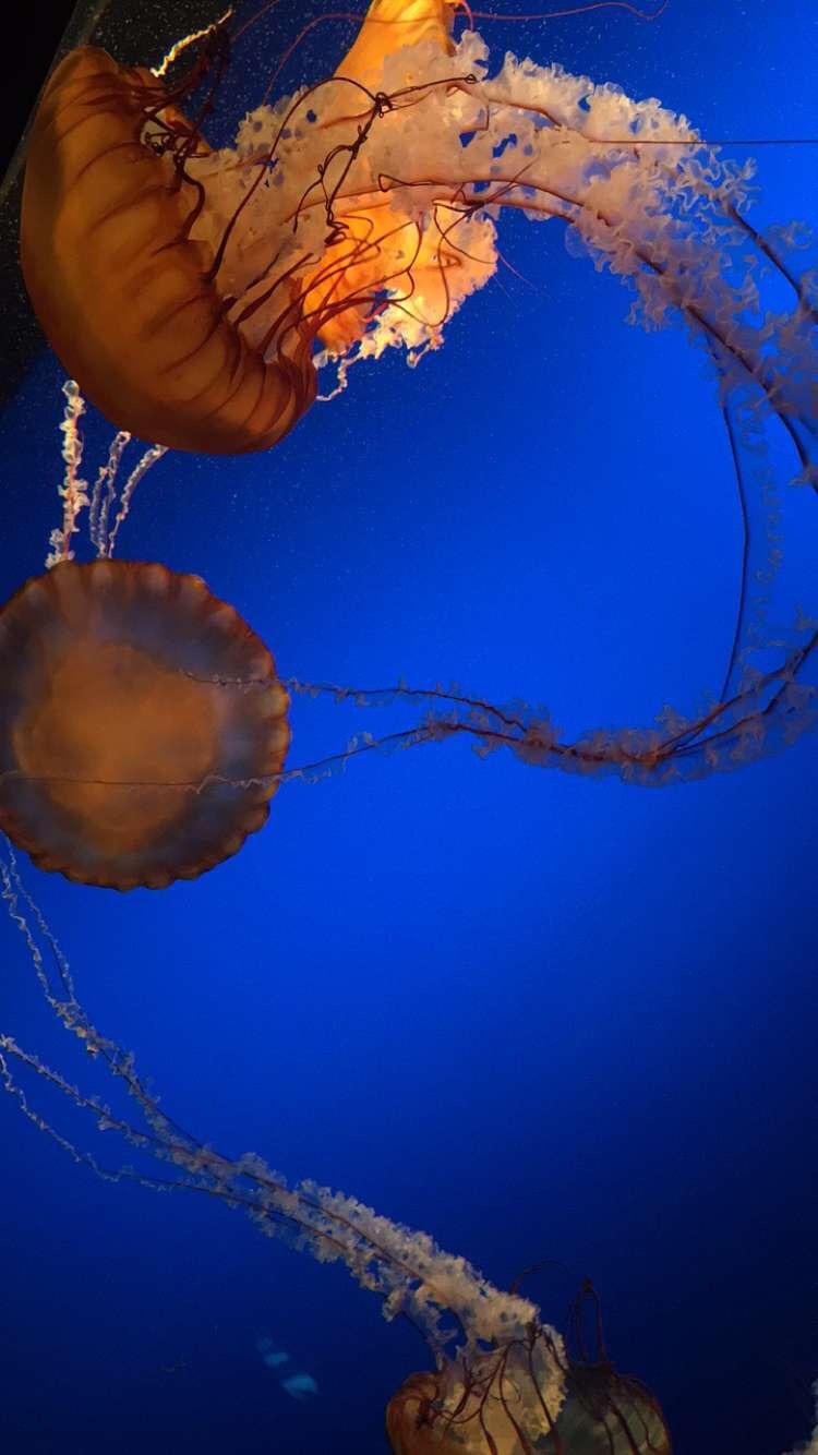 Omaha Henry Doorly Zoo - Jellyfish