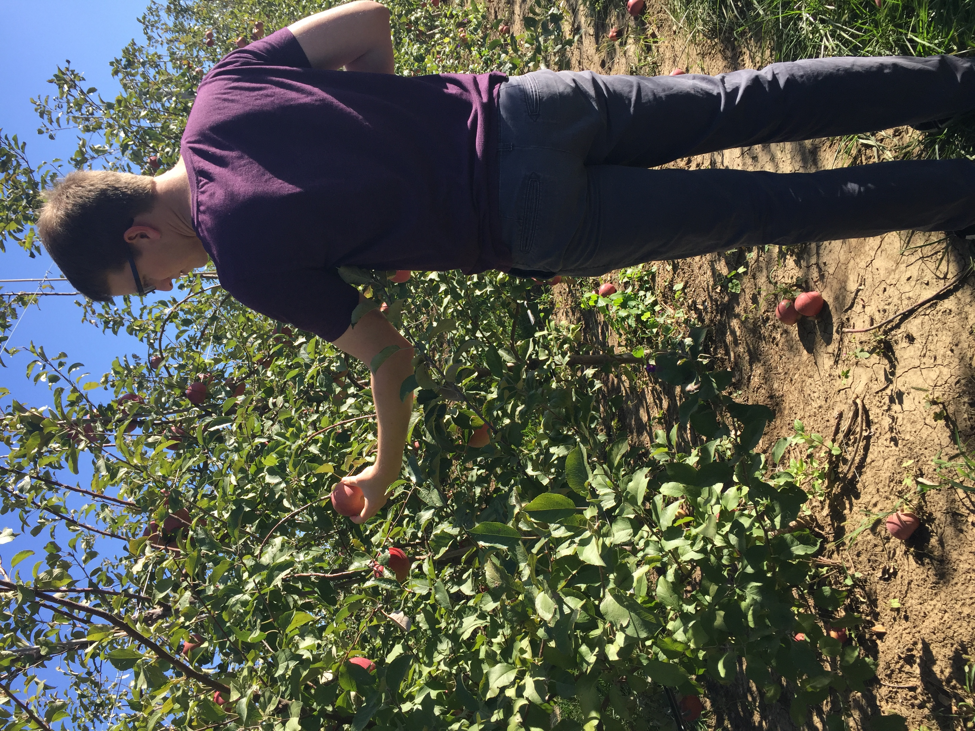 Valas Pumpkin Patch - Apple Picking