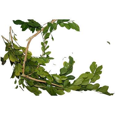 Set of 7 Bitter Herbs