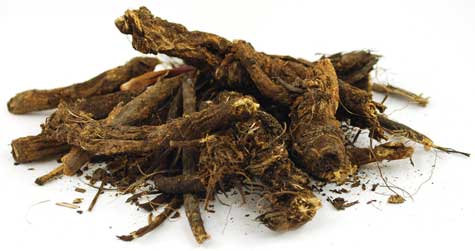 Golden Seal Root Cut 1/2 oz (Hydrastis canadensis)
