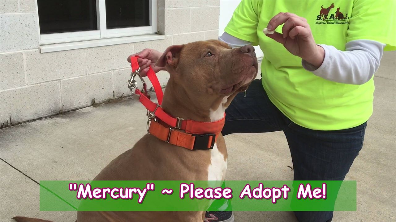 Meet Mercury