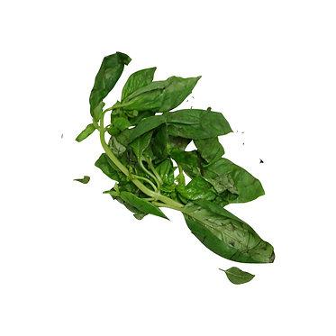 Fresh Albaca Plant