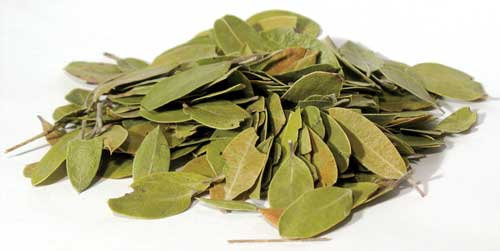 Bearberry, Whole (Uva Ursi) 2 oz (Mexican)