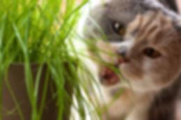 gatto mangia erba