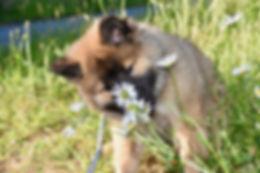 cane annusa camomilla