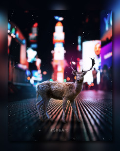 Deer on the Streets
