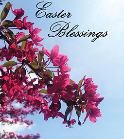 blossoms_13534ac.jpeg