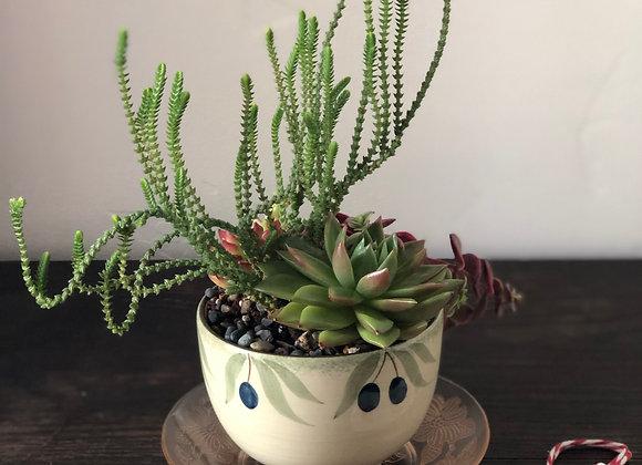 Tea Cup & Saucer | The Happy Succulent