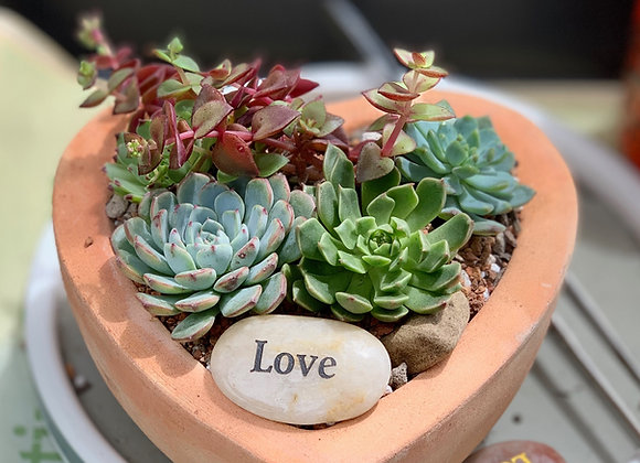 Heart Succulent Arrangement | The Happy Succulent