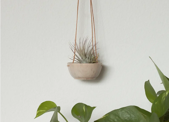 Tillandsia Swing