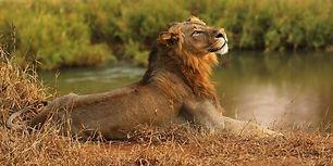 africa4.jpg