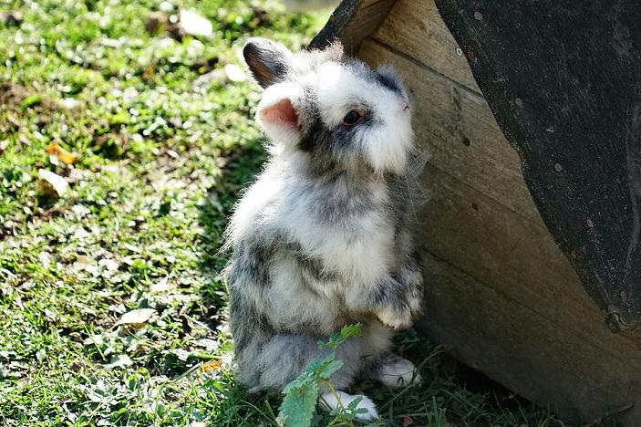 Kaninchen_Männchen.jpg