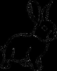 Kaninchen pixabay 1.png